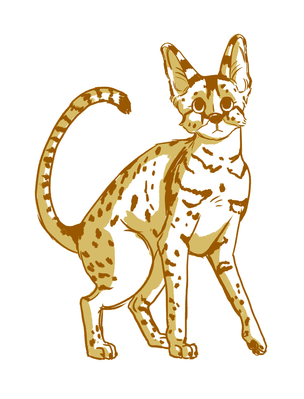 Savannah Cat clipart #18, Download drawings