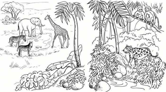 Savannah coloring #14, Download drawings