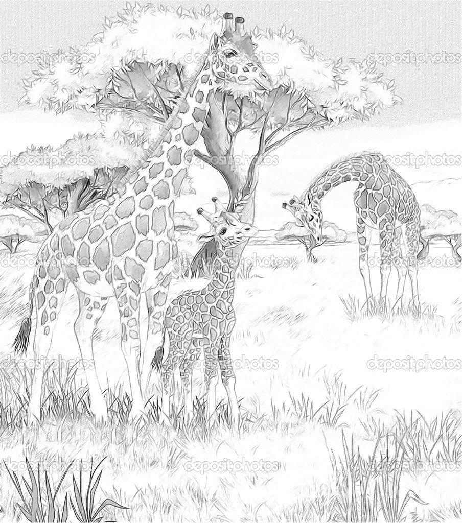 Savannah coloring #11, Download drawings