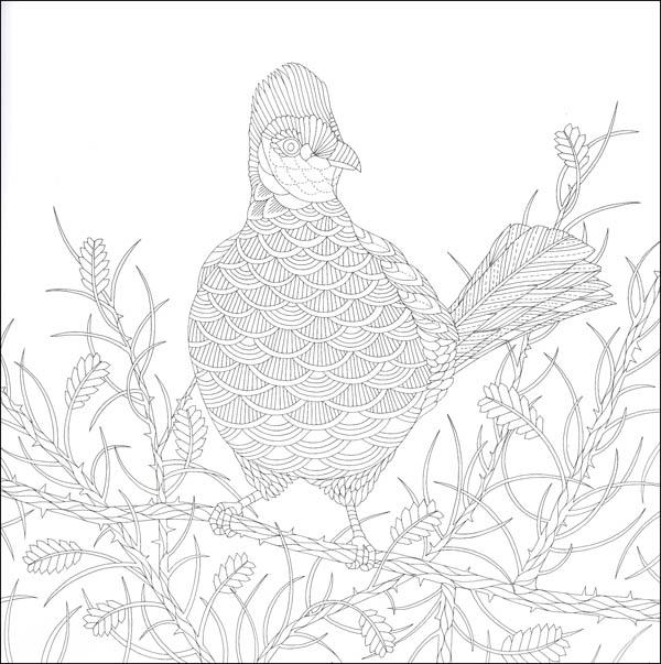 Savannah coloring #4, Download drawings