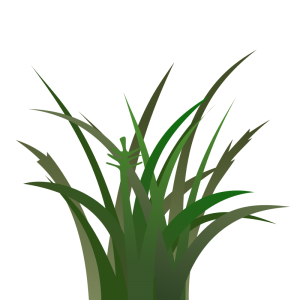 Saw Grass clipart #16, Download drawings