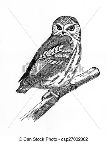 Saw Whet Owl clipart #2, Download drawings
