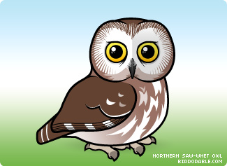 Saw Whet Owl clipart #7, Download drawings