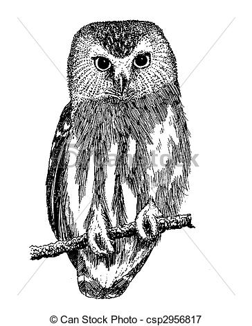 Saw Whet Owl clipart #10, Download drawings