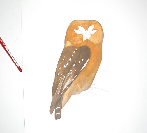 Saw Whet Owl coloring #6, Download drawings