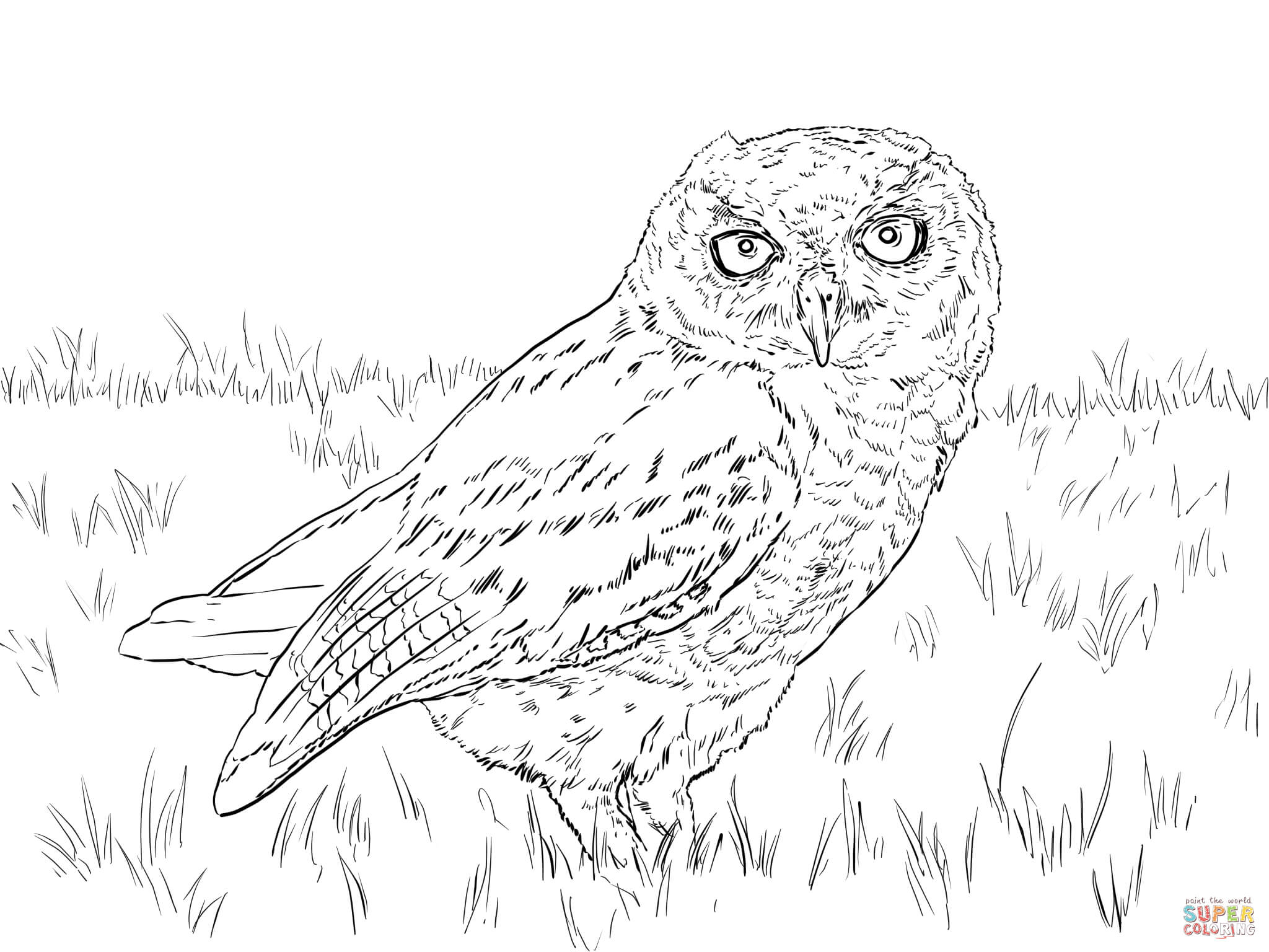 Saw Whet Owl coloring #20, Download drawings