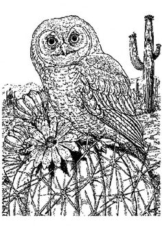 Saw Whet Owl coloring #13, Download drawings