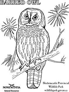 Sawback Range coloring #15, Download drawings