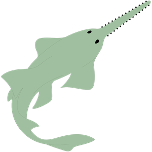 Sawfish clipart #1, Download drawings