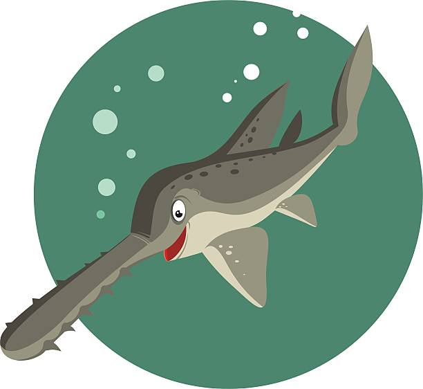 Sawfish clipart #11, Download drawings