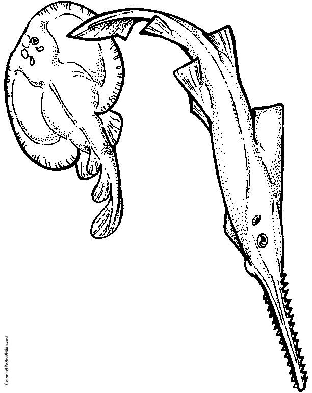 Sawfish coloring #15, Download drawings