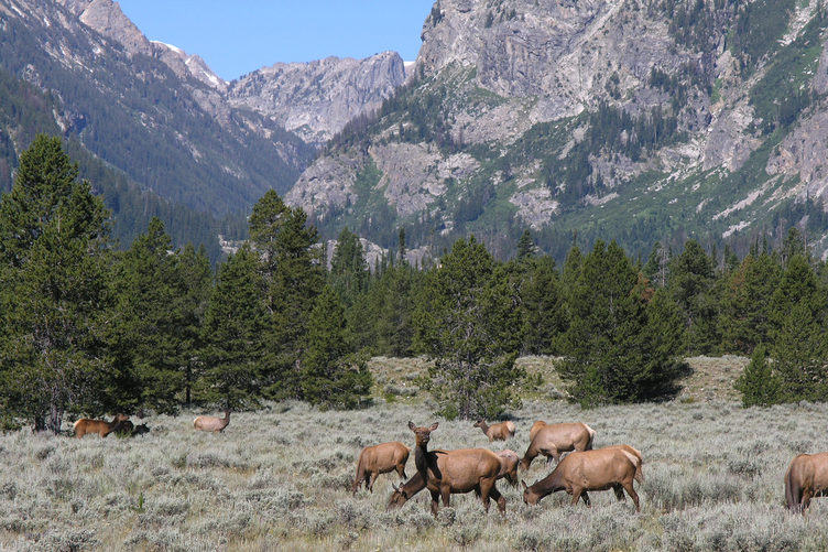 Sawtooth National Recreation Area clipart #4, Download drawings