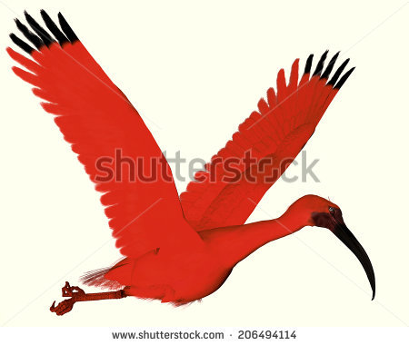 Scarlet Ibis clipart #4, Download drawings