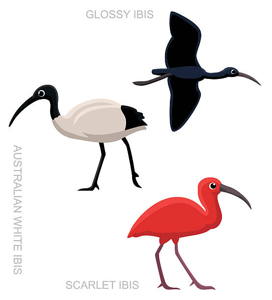 Scarlet Ibis clipart #6, Download drawings