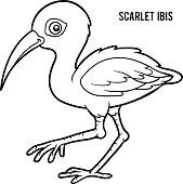 Scarlet Ibis coloring #8, Download drawings