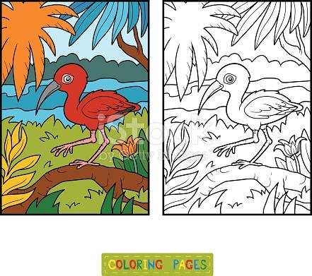 Scarlet Ibis coloring #6, Download drawings