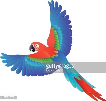 Scarlet Macaw clipart #4, Download drawings