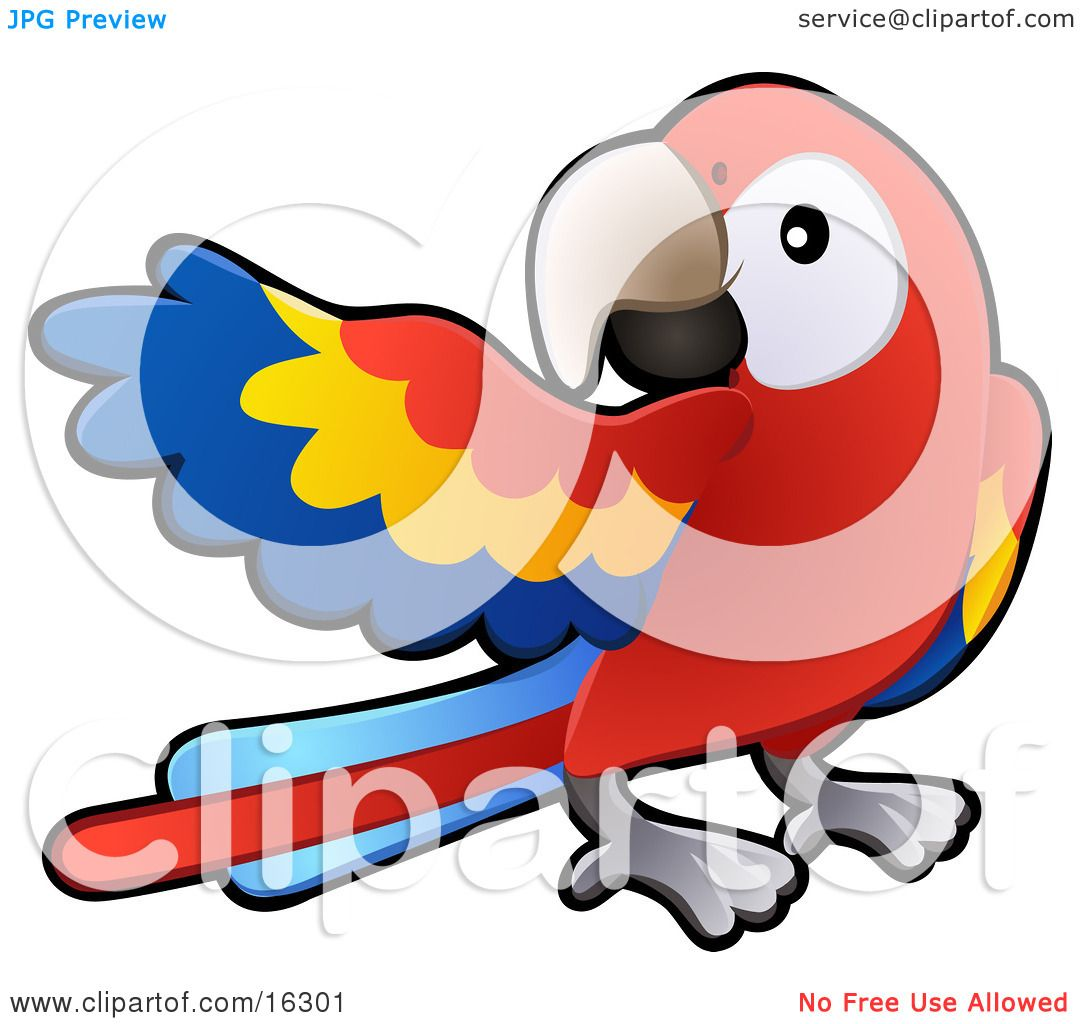 Scarlet Macaw clipart #18, Download drawings