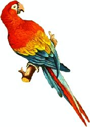 Scarlet Macaw clipart #2, Download drawings