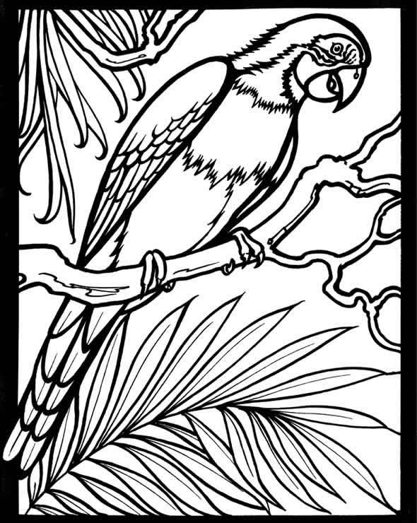 Scarlet Macaw coloring #15, Download drawings