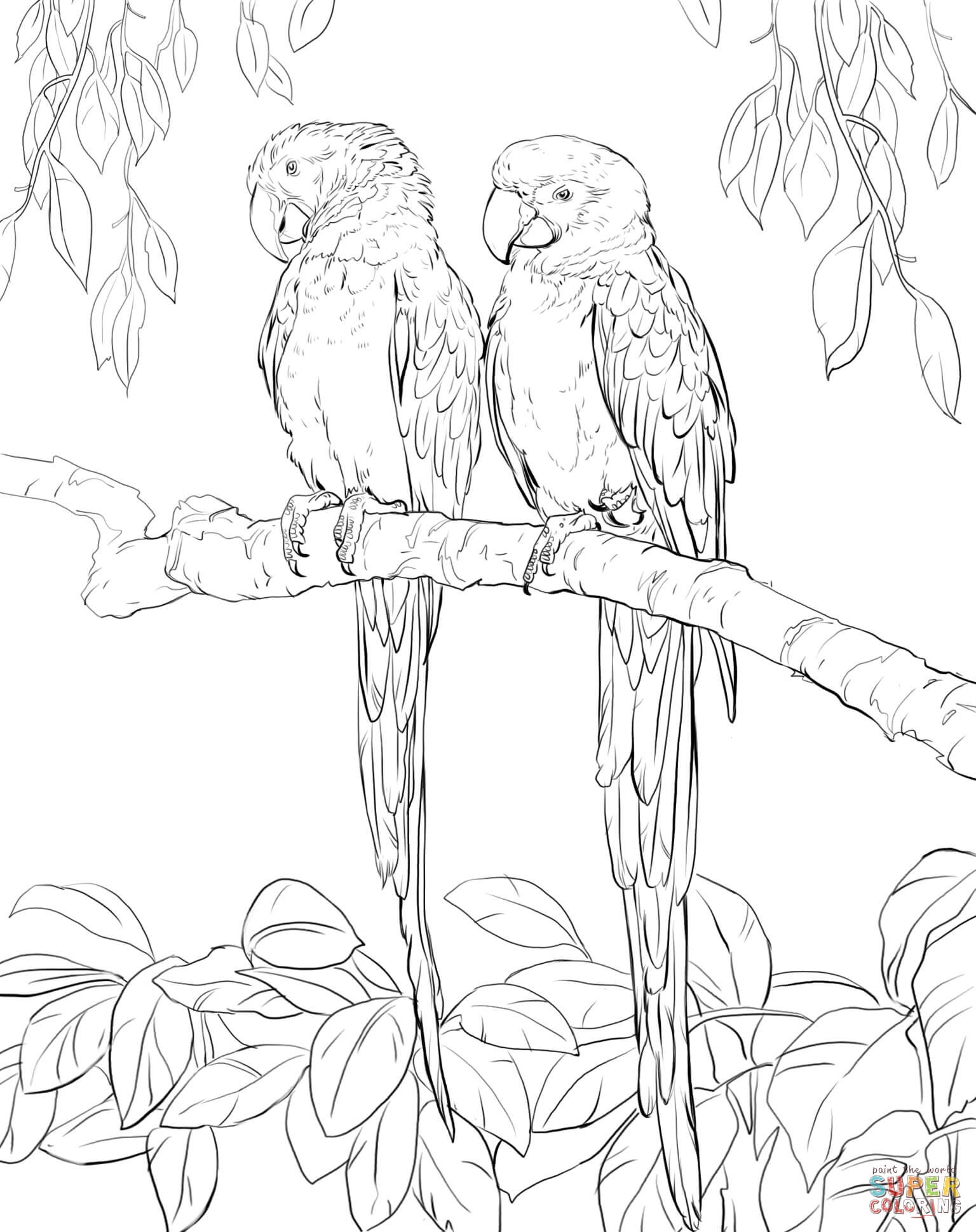 Scarlet Macaw coloring #5, Download drawings