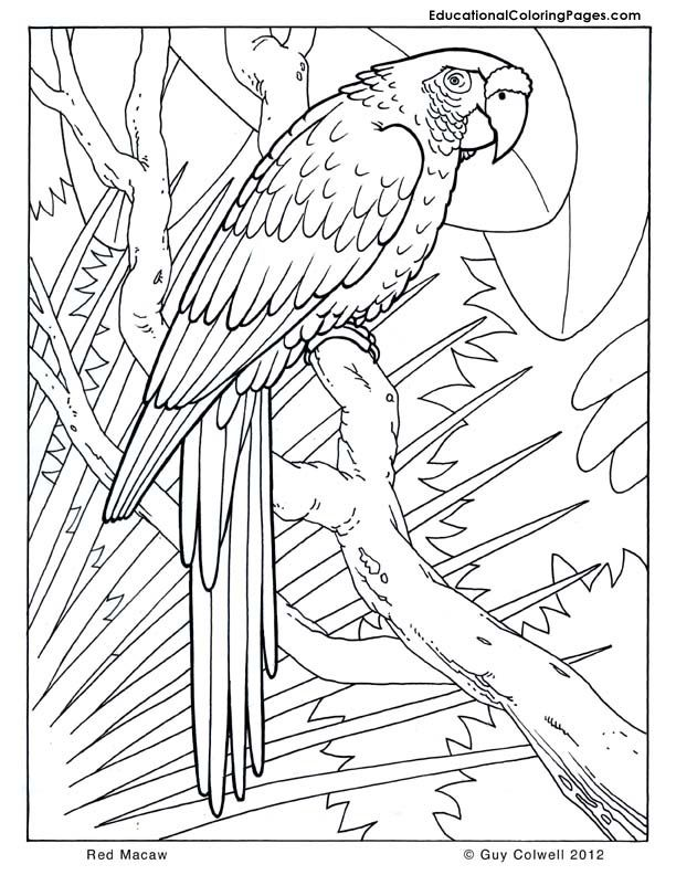 Scarlet Macaw coloring #6, Download drawings