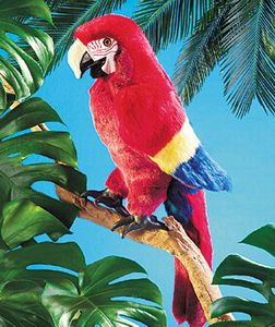 Scarlet Macaw coloring #1, Download drawings
