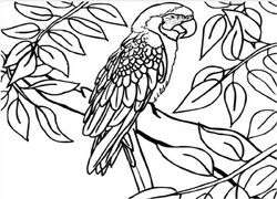 Scarlet Macaw coloring #16, Download drawings