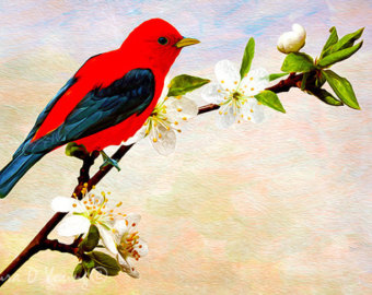Scarlet Tanager clipart #1, Download drawings