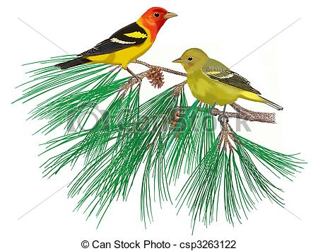 Scarlet Tanager clipart #11, Download drawings