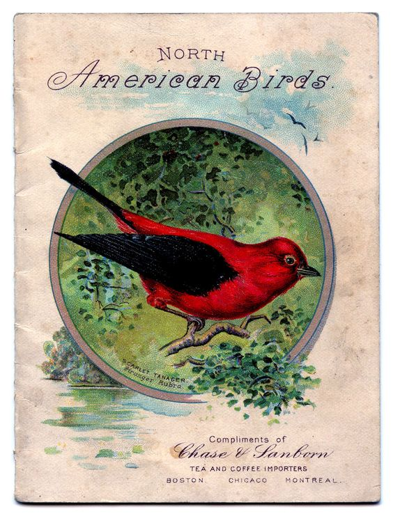 Scarlet Tanager clipart #2, Download drawings