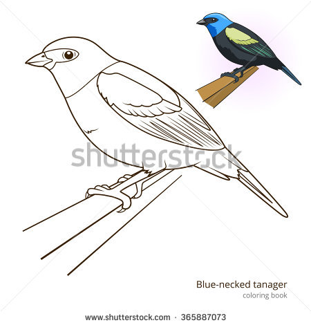 Scarlet Tanager coloring #15, Download drawings