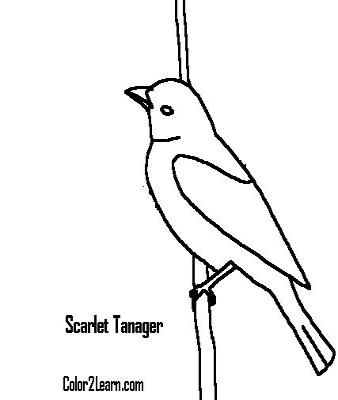 Scarlet Tanager coloring #2, Download drawings