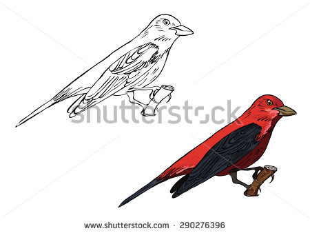 Scarlet Tanager coloring #5, Download drawings