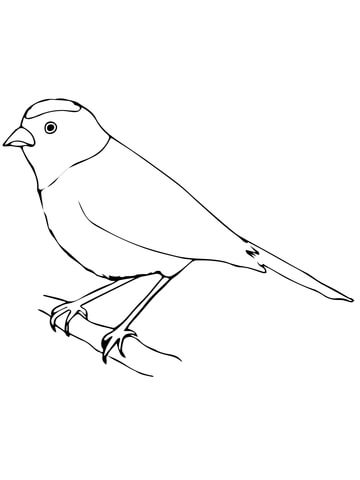 Scarlet Tanager coloring #4, Download drawings