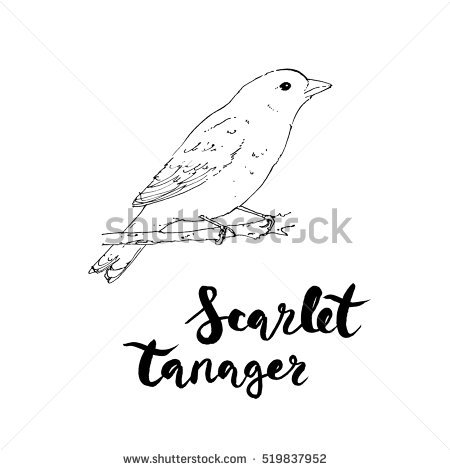 Scarlet Tanager coloring #14, Download drawings