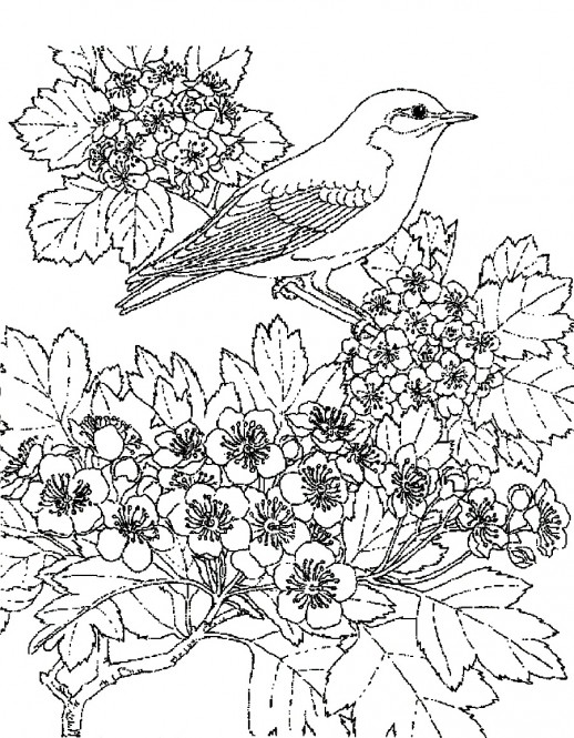free scenery coloring pages - photo#4