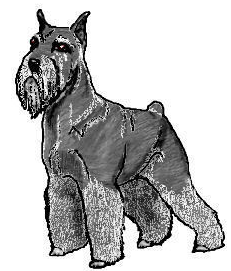 Schnauzer clipart #18, Download drawings