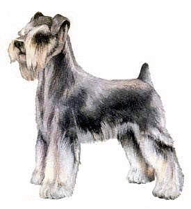 Schnauzer clipart #5, Download drawings