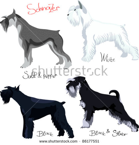 Schnauzer svg #11, Download drawings