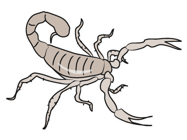 Scorpion clipart #1, Download drawings