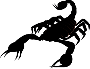 Scorpion clipart #8, Download drawings