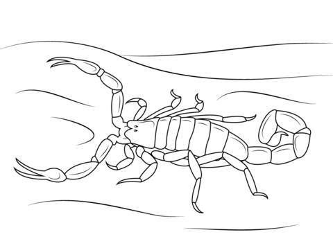 Scorpion coloring #12, Download drawings