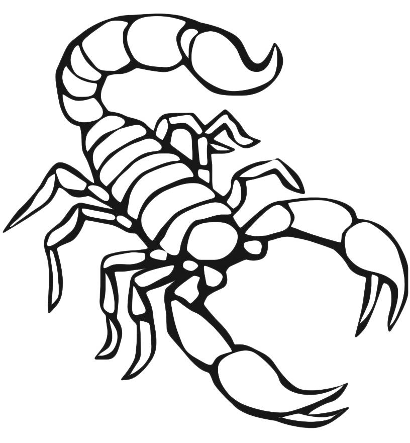Scorpion coloring #11, Download drawings