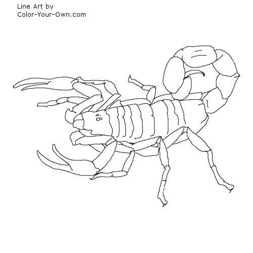 Scorpion coloring #7, Download drawings