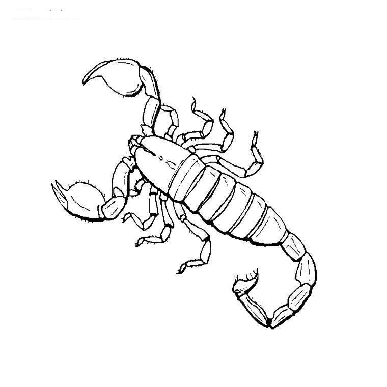 Scorpion coloring #1, Download drawings