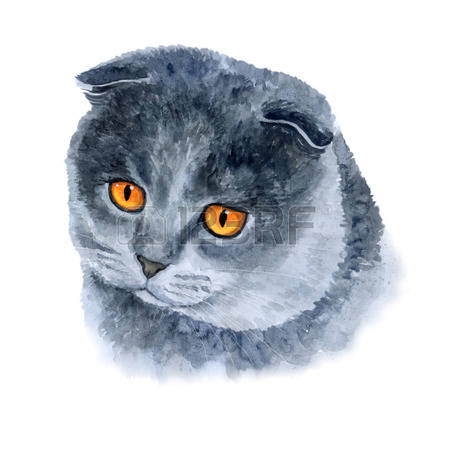 Scottish Fold clipart #6, Download drawings