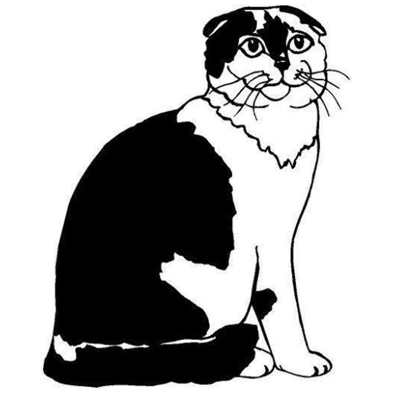Scottish Fold clipart #17, Download drawings
