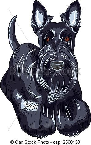Scottish Terrier  clipart #13, Download drawings