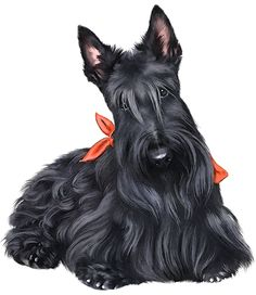 Scottish Terrier  clipart #20, Download drawings